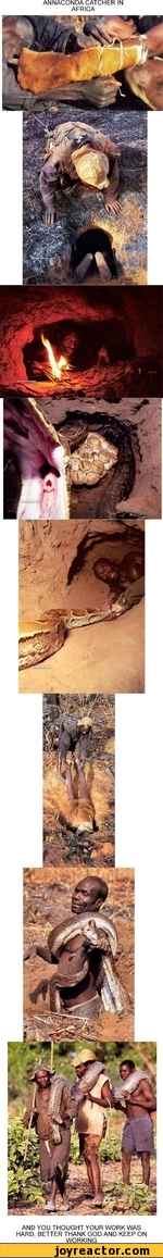 ANNACONDA CATCHER IN AFRICA AND YOU THOUGHT YOUR WORK WAS HARD, BETTER THANK GOD AND KEEP ON WORKING_