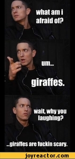 wait why you laughing? ..giraffes are fuckin scary.