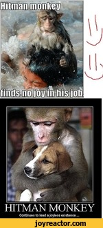 Hitman Monkeycontinues To Lead A Joyless Existence Funny Pictures Funny Pictures Best Jokes Comics Images Video Humor Gif Animation I Lol D