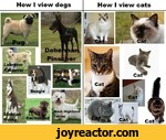 How I view dogsHow I view cats