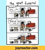 The gnat funeral