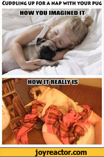 Cuddling up for a nap with your pug